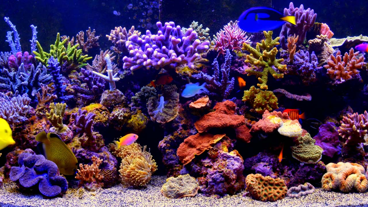 Aquarium Live Wallpaper Windows 10